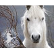 Compose Hivernal pour chevaux