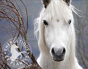Composé Hivernal pour chevaux