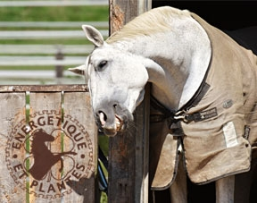 Dermite estivale du cheval, antidemangeaisons