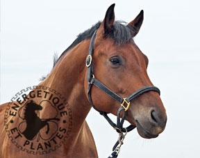 Synergie anti-stress pour chevaux