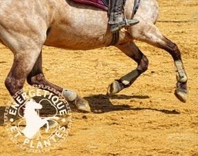 Circulation et Naviculaire pour chevaux