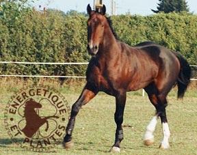 Synergie pour soigner en cas de tendinite et entorse du cheval