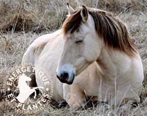 Synergie pour chevaux d'age
