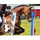Pack locomotion du cheval