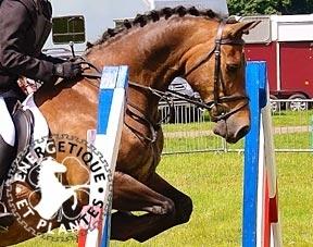 Pack soin locomoteur du cheval