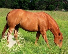 Synergie fourbure cheval et poney