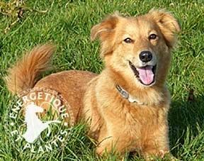 Foie, rate, pancreas pour chien