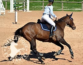 Synergie post Lyme pour chevaux