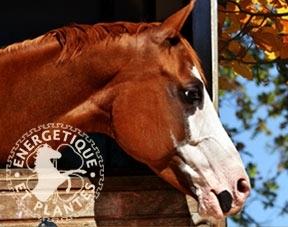 Cure d'automne pour chevaux