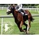 Synergie Myo phyto pour la musculature du cheval