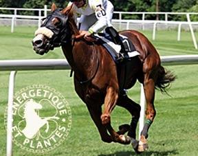 Synergie myosite du cheval