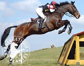 Synergie Top vitalité pour chevaux