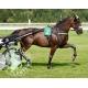 Compose foie & intestins pour chevaux