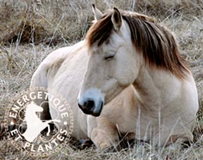 cheval_diarrhee_foie.jpg