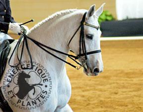 cheval_verrues_sarcoide.jpg