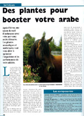 article_cheval_arabe.JPG