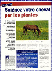 article_soins_plantes.JPG