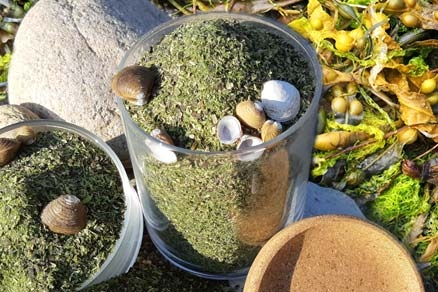 Phyto Algues