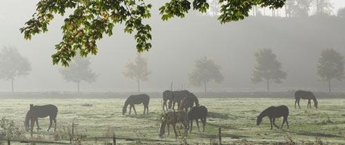 Cure d'automne du cheval