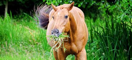 Plantes Médicinales pour chevaux
