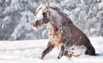 Aider son cheval à bien passer l'hiver