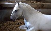 L'anémie chez le cheval