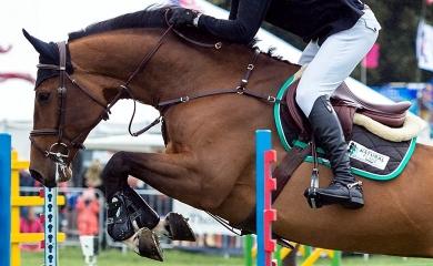 Le cartilage chez le cheval, un tissu articulaire essentiel