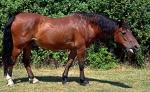 L'emphyseme pulmonaire chez le cheval